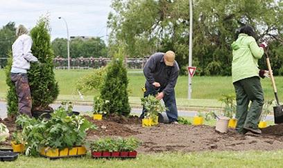 ajardina.es servicios de poda y jardinería profesionales