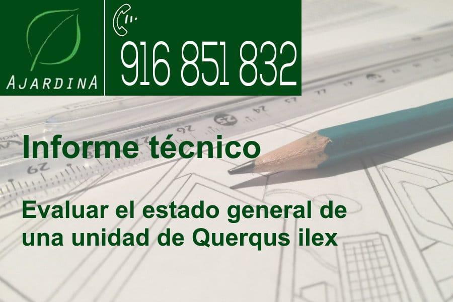 Informe tecnico de arbolado en Galapagar. Realizado por los técnico titulados de Ajardina
