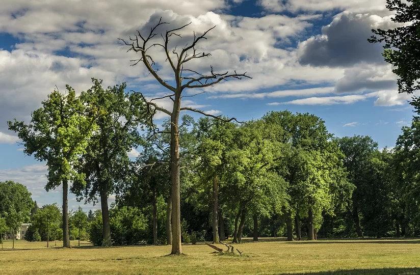 Diccionario sobre árboles y tipos de hoja. Realizado por los profesionales de Ajardina
