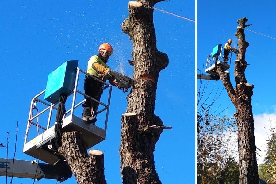 ¿Preguntas que debes realizarte antes de talar un árbol?. Operario realizando un trabajo en altura