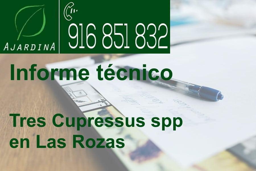 Informe técnico de tres Cupressus spp en Las Rozas. Ajardina