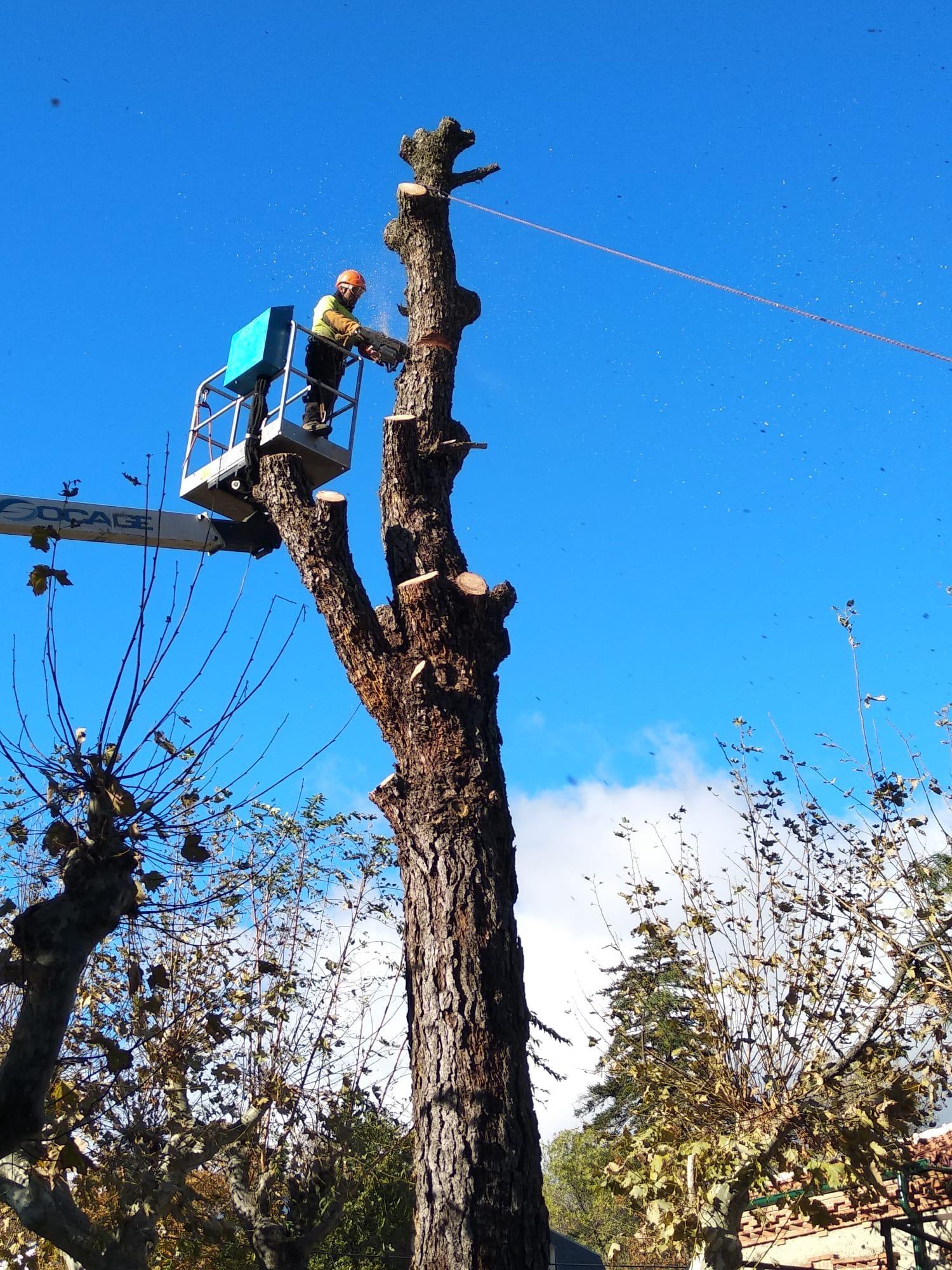 ¿Cuánto cuesta talar un árbol?