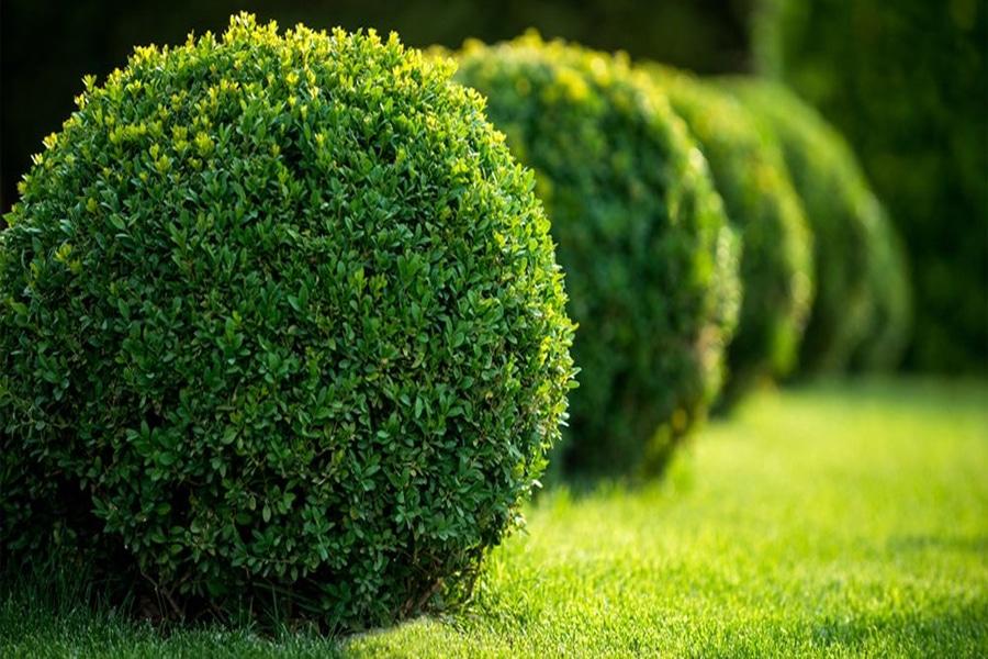 Poda de árboles ornamentales