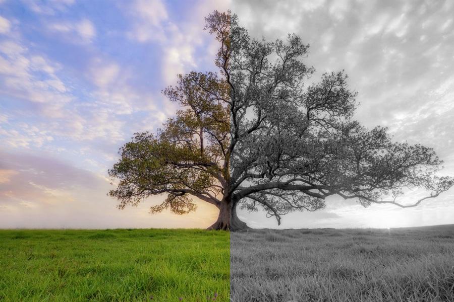 Cómo pueden afectar a los árboles el cambio climático y las plagas