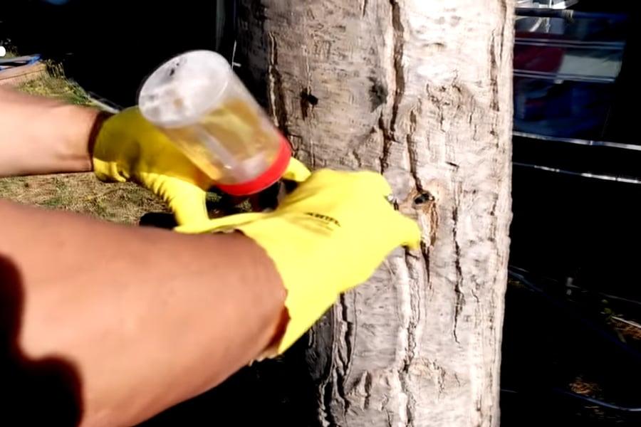 Conoces el método alternativo para erradicar las plagas más comunes