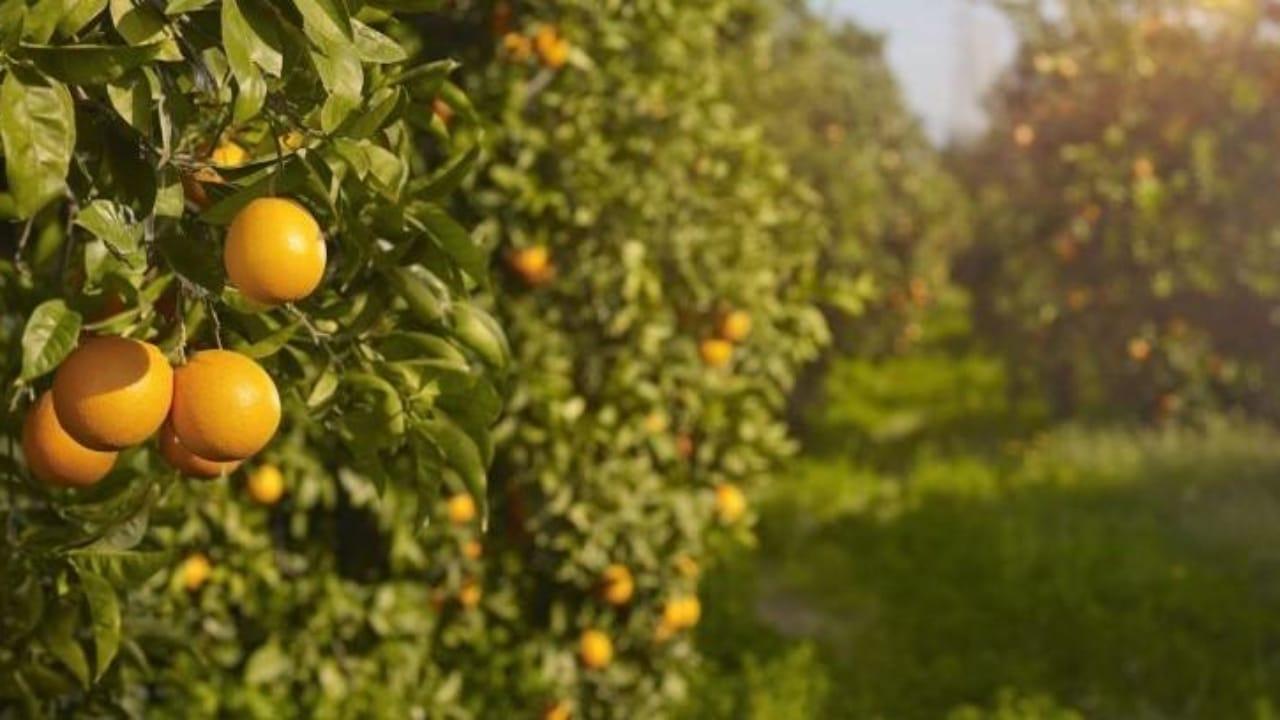 Por qué debemos utilizar la endoterapia en árboles frutales