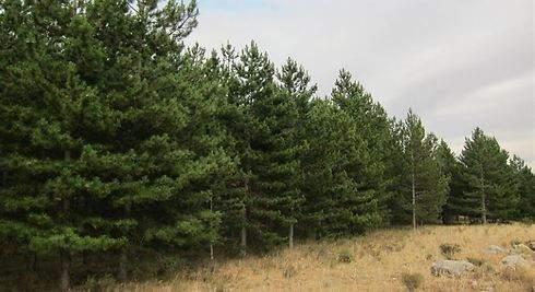 Los árboles más frecuentes en España-3