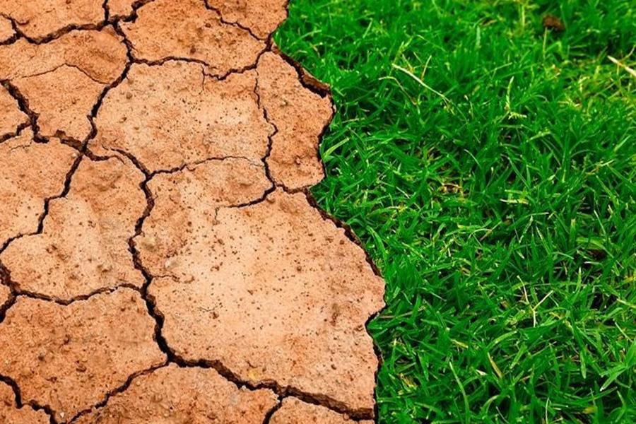 El cambio climático aumenta la plaga de la oruga procesionaria en España