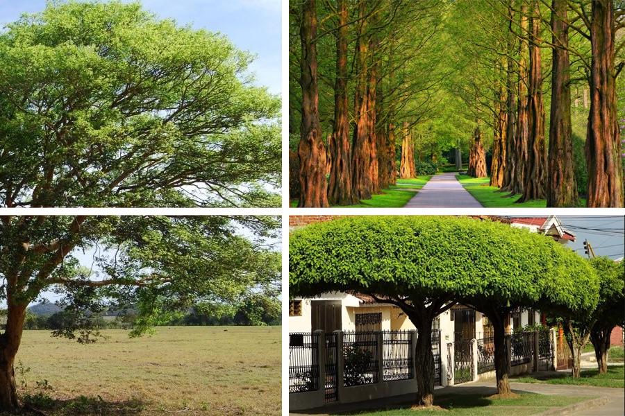 Todo sobre el mantenimiento y poda de árboles de sombra
