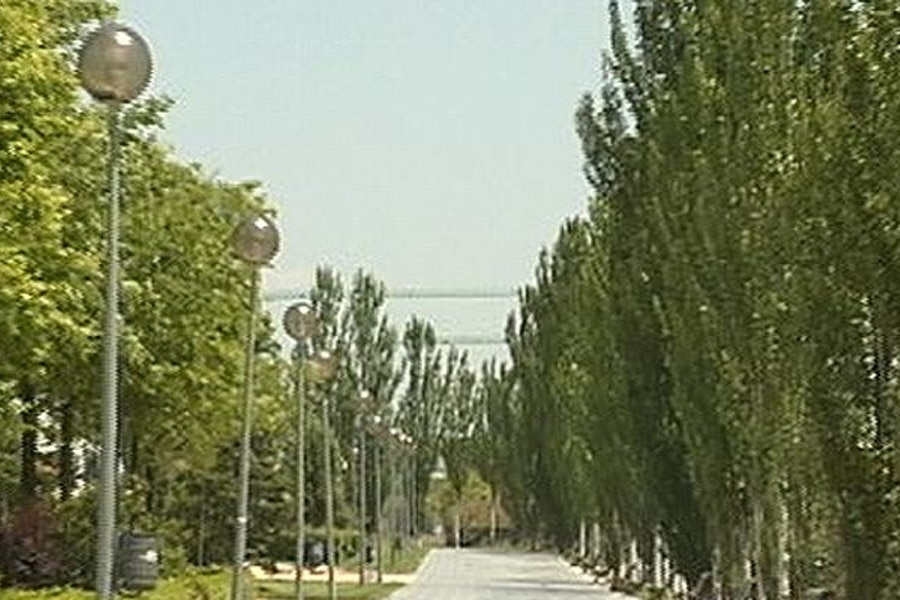 Poda de árboles en Alcobendas