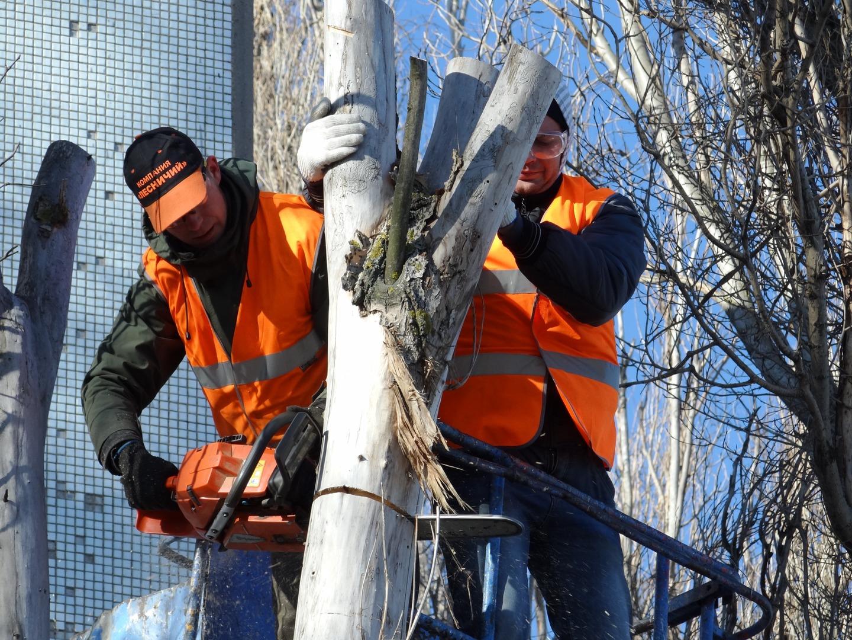 Tala de árboles en Alcalá de Henares