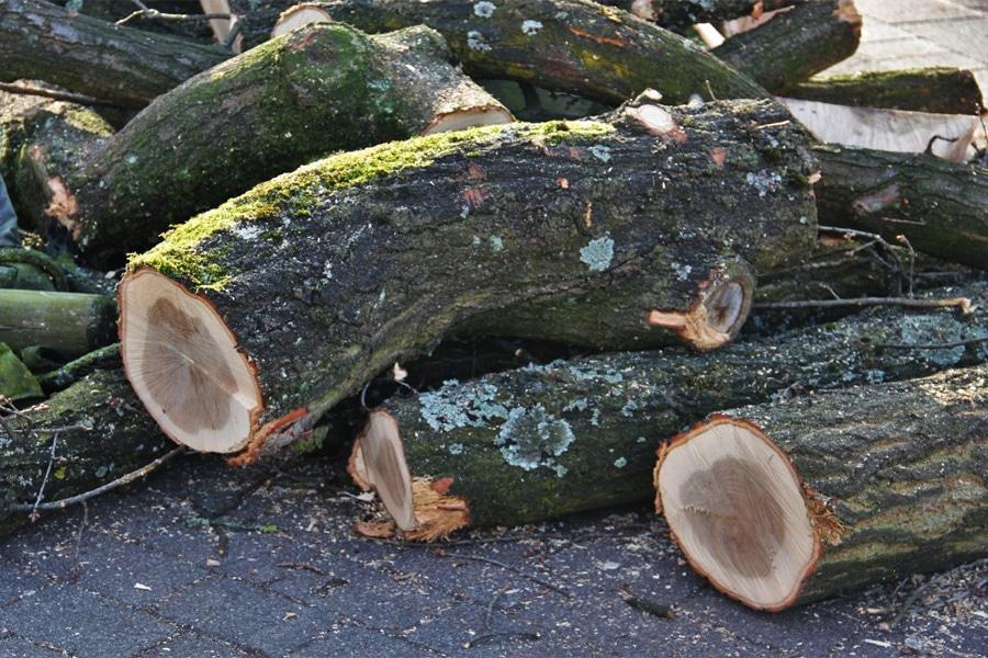Tala de árboles en Boadilla del Monte