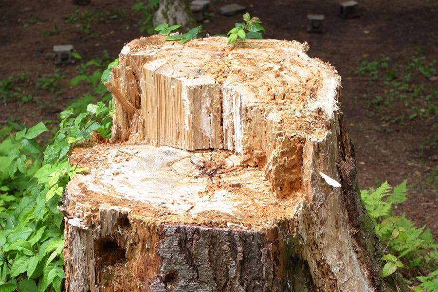 Tala de árboles en Galapagar