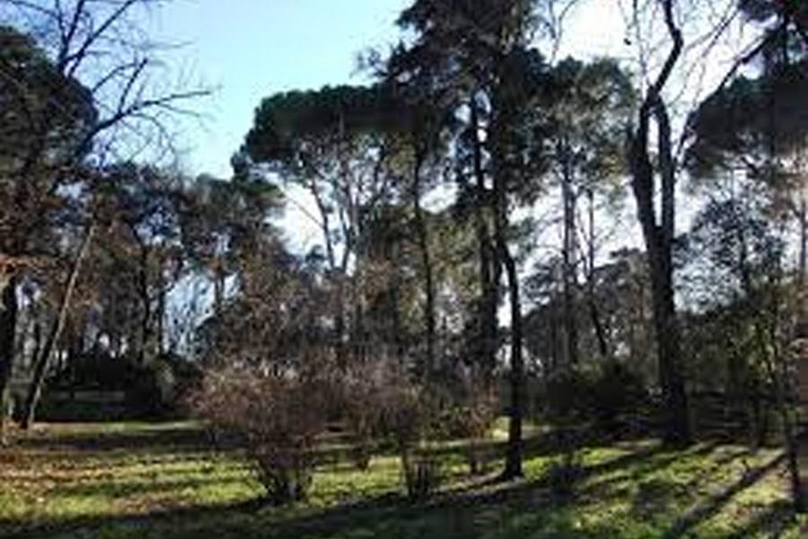 Tala de árboles en Getafe