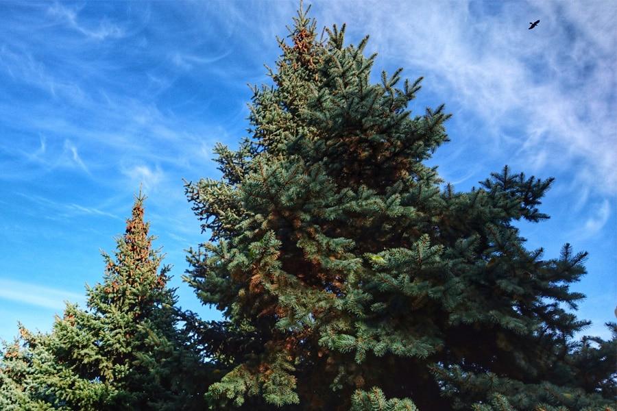 Cómo afecta el estrés hídrico a los árboles